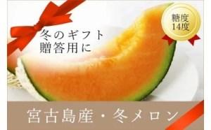 【早期受付】 毎年大好評!宮古島冬メロン(2L×1玉)贈答用 冬のギフト