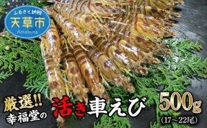 【鮮度抜群】厳選・幸福堂の活き車えび(500g)17~22尾