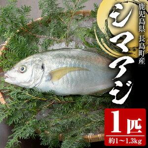 シマアジ1匹 約1.0~1.3kg イメージ