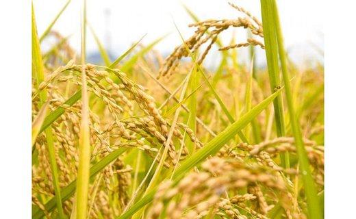 令和3年産 「日本一出荷の早い新米」種子島産コシヒカリ5kg イメージ