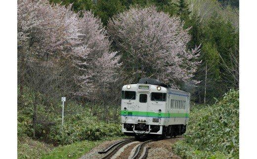 【JR北海道】北海道フリーパス イメージ