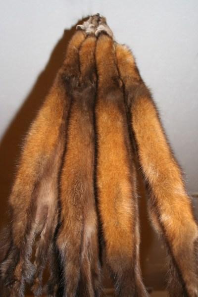 Exquisite Pine Marten Pelts