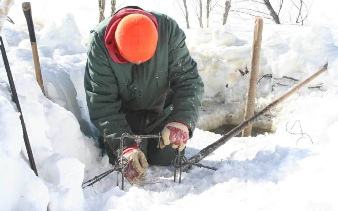Trapping Beaver Under The Ice