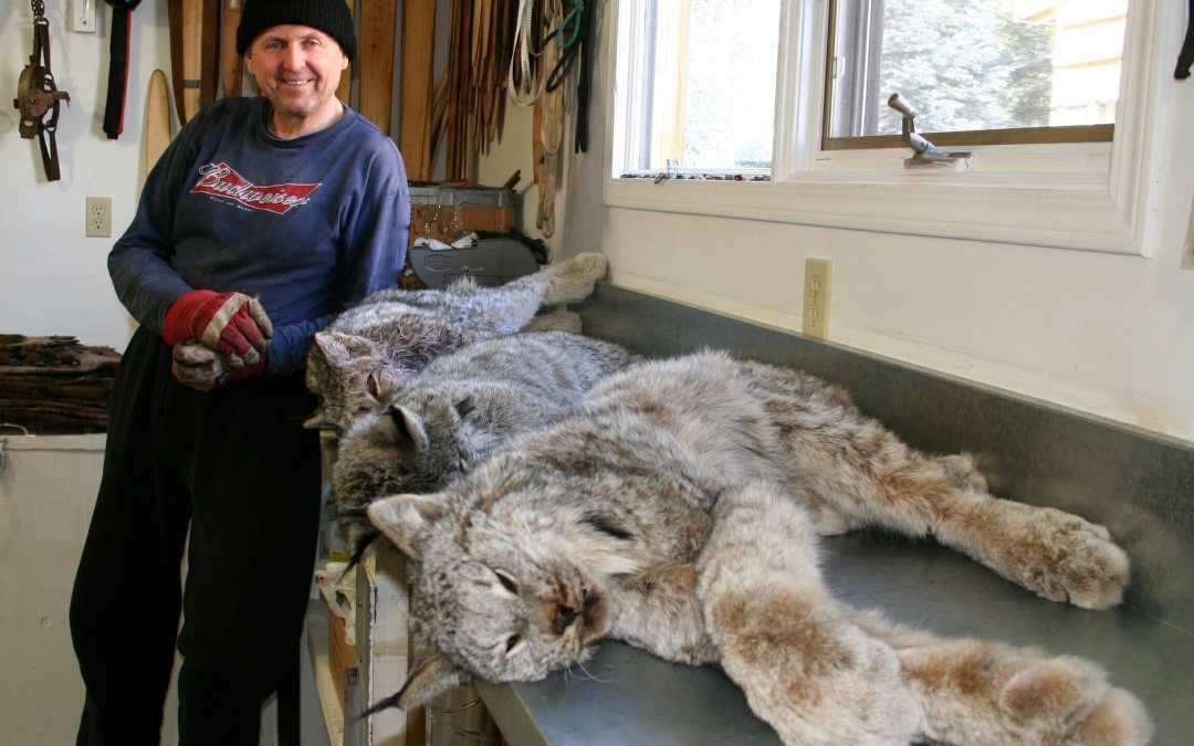 Wild Canadian Lynx Fur