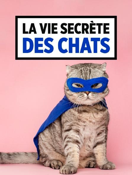 La Vie Secrete Des Chats : secrete, chats, Secrète, Chats, Streaming, Molotov.tv