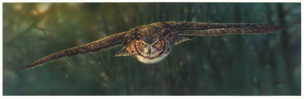 aerial_intensity____great_horned_owl_by_denismayerjr-d8xso3e