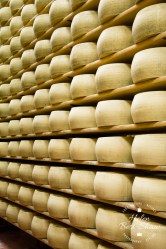 Wheels of Grana Padano PDO maturing