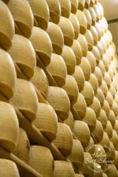 Wheels of Grana Padano PDO maturing