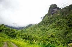 Tahitian jungle
