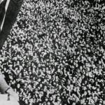 Italia 1934 Organizaciòn