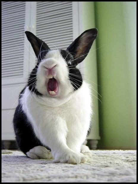 bunny26.jpg
