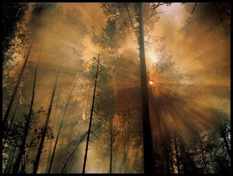 800px-forestfire4.jpg