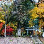 秋の絶景『乙女神社』