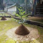 『但馬国屈指の古社』粟鹿神社