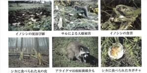 野生動物 害獣 被害