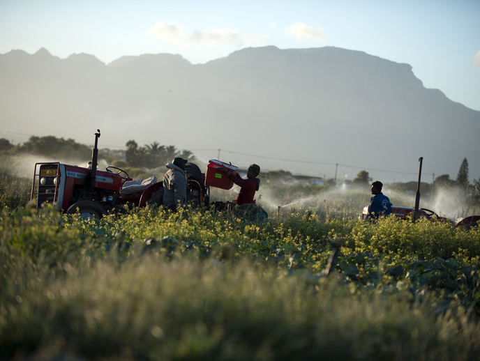 There are many opportunities to solve the problems and realise the potential of the Philippi Horticultural Area, a food-growing gem in the middle of Cape Town. Image: Mail & Guardian