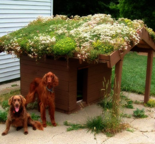 Dog House Green Roof
