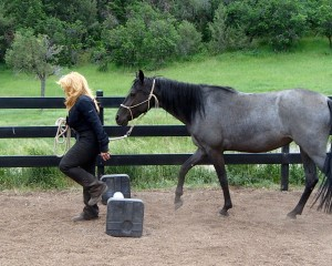Karen and 3 year old Isabelle do Great Lakes doing great at ground work!
