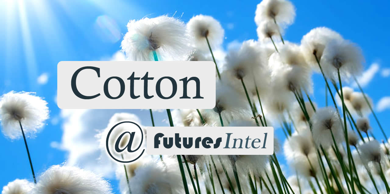 Cotton Update – Tomorrow Could Be a Huge Determining Day