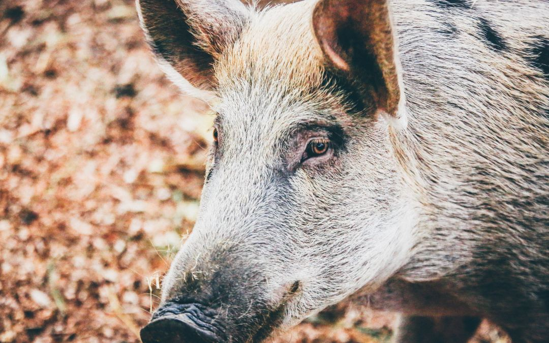 The How and The What Of Eating Animals