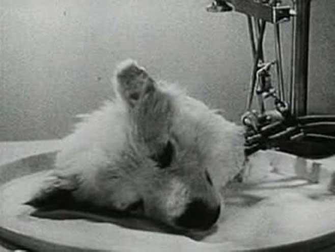 Deli bilimadamı Sergei Bruyukhonenko'nun kesik köpek kafalı deneyi