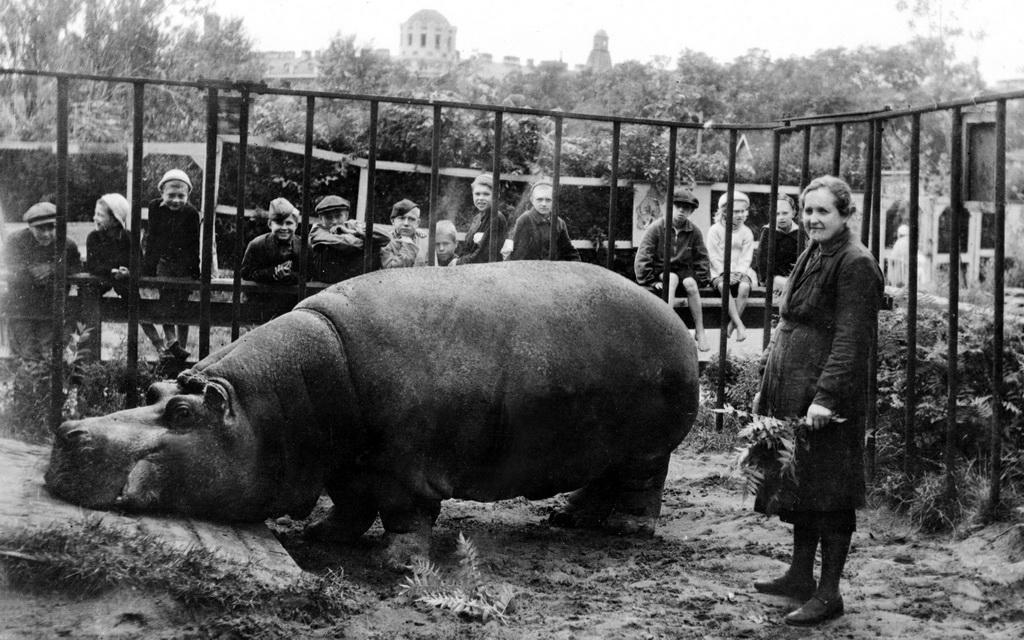 Leningrad Kuşatması'nın ilk öldürdüğü: Fil Betty 1