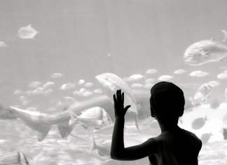 Blue Ocean Fishes and Child_jeanbaptiste Audrerie