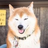第16回備後ブロガー会@尾道シェア