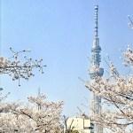 【お花見】桜とスカイツリーを一度に楽しめる錦糸公園