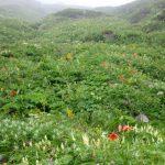 3日目の下山途中のお花畑(特にクルマユリがきれい)
