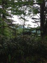 周囲の木々に覆われ景色が見れない。