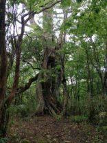 大木がチラホラ