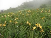 蝶ヶ岳から常念岳もいくつものピークがあり大変であったが、ニッコウキスゲなどのお花が疲れを癒してくれた。