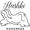 Hashki Havanese Logo