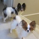 Abby&Rusty FuzzyBuddyBC