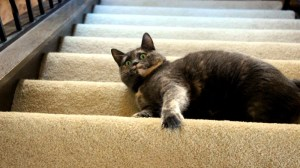 cat-on-stairs