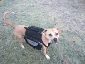FuzzyBuddyBC Moxie in her backpack