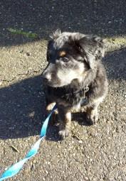 Langley dog walking