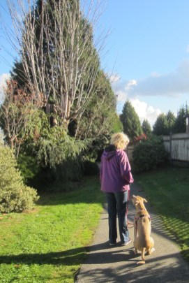 Dog training Surrey