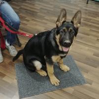 Surrey Dog Training
