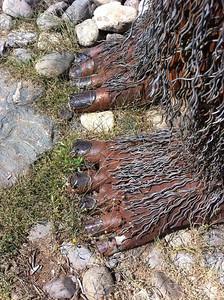 happy camp bigfoot feet