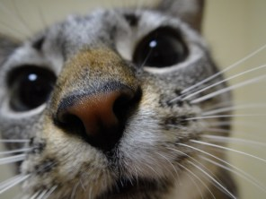 Oliver sniffing my camera.