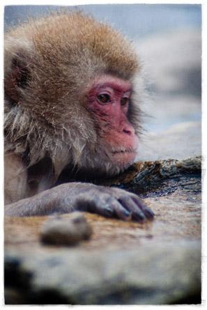 macaco_1