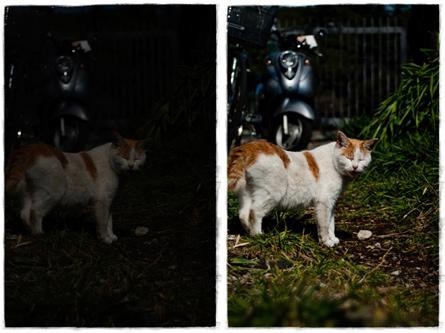 gato_dos1