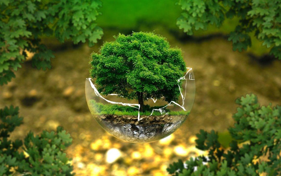 """Riparte la """"scuola per l'ambiente"""" di Arpa FVG"""