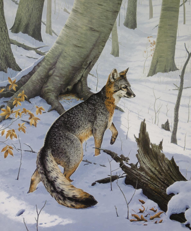 Kentucky Department of Fish  Wildlife Rick Hill Paintings
