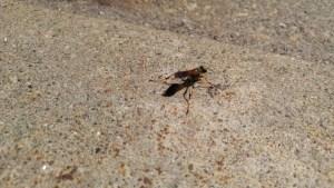 Bee LG G4 Camera shot