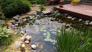 Pond LG G4 Camera shot