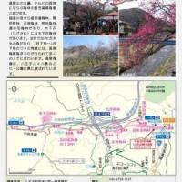 高尾梅郷 梅祭り 〜 7つの梅林で春を感じる  〜