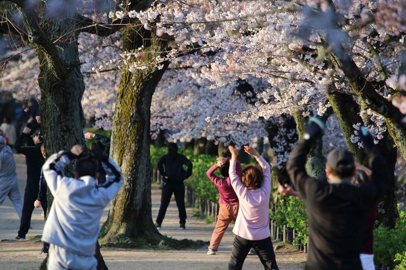 桜の下でラジオ体操